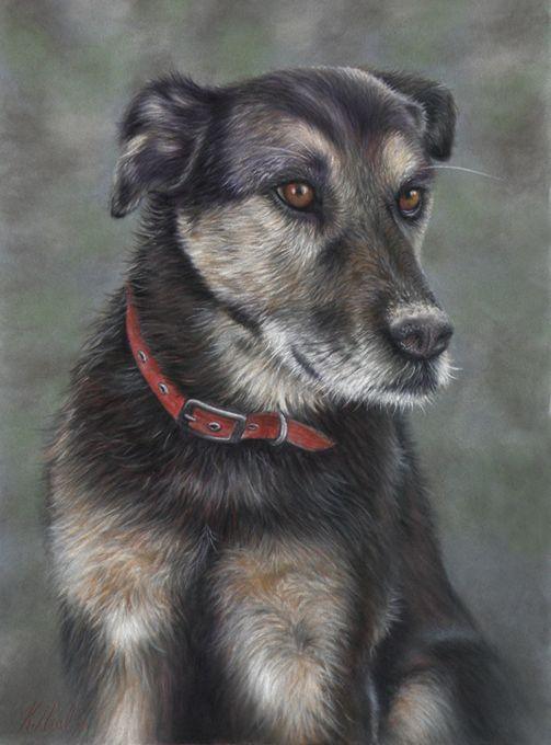 New Zealand Huntaway,Old English Sheepdog,herding dog,drover,driver