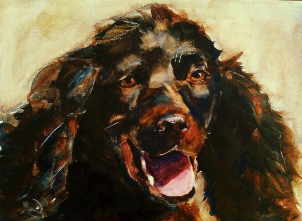 Boykin Spaniel,purebred of interest,history,