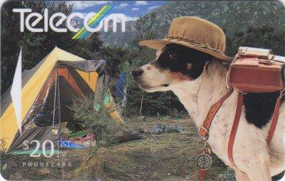 Jack Russell Terrier,JRT,commercial,advertising,SPOT