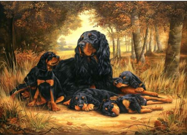 Gordon Setter,history,Black and Tan Setter,breed history