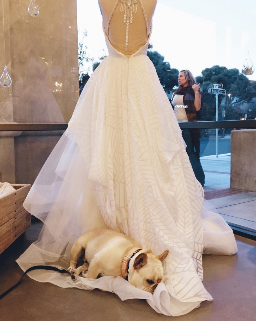Wedding Dress Dog