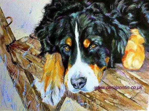 Bernese Mountain Dog,Gelbbacker,yellow cheeks,vieräuger,four eyes,draught dog, sennenhund,berner