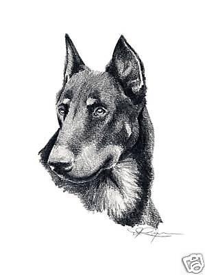 Berger de Beauce,Beauceron,herding dog,brie,