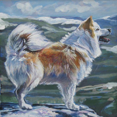 Icelandic Sheepdog,herding dog,icie