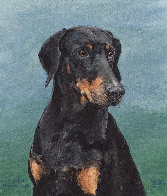 Manchester Terrier,Doberman Pinscher,rosettes,coat,color