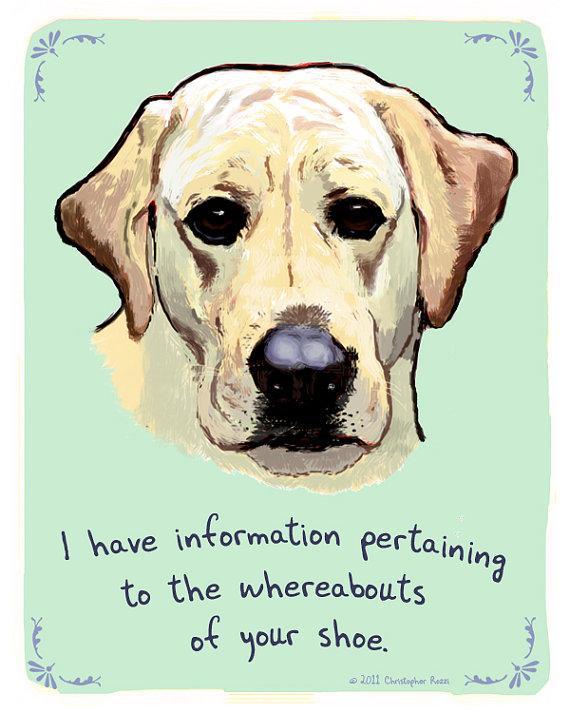 dog breeds,purebred dogs,labrador retriever