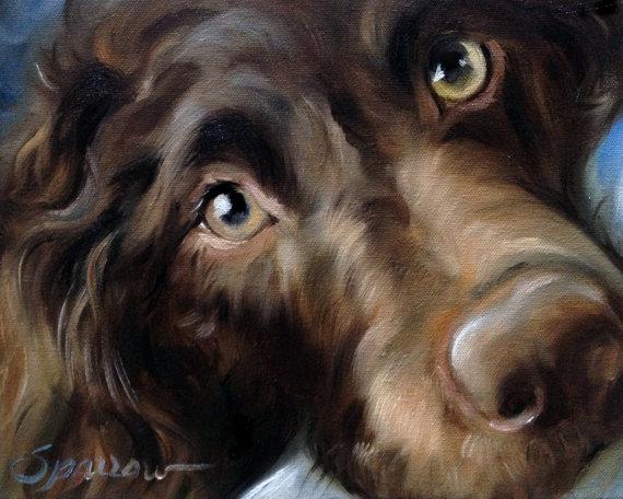 eyes,Weimaraner,Ibizan Hound,Boykin Spaniel,Rottweiler,Cane Corso,Polish Lowland Sheepdog,color