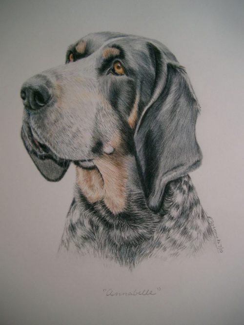 Bluetick Coonhound,heaven