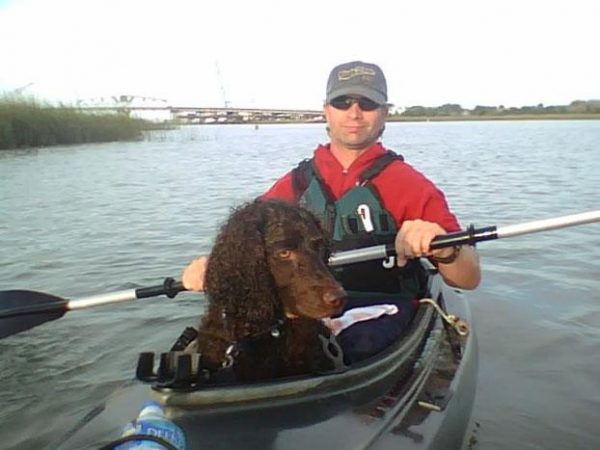 Boykin Spaniel,swamp poodle,south carolina state dog,garden and gun magazine