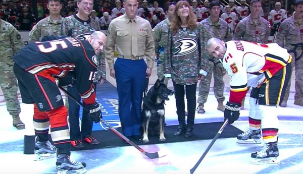 Bomb sniffing dogs,German shepherd Dog,military dog