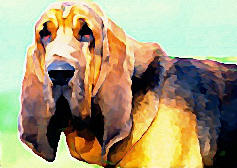 Bloodhound,scent pocket,nose