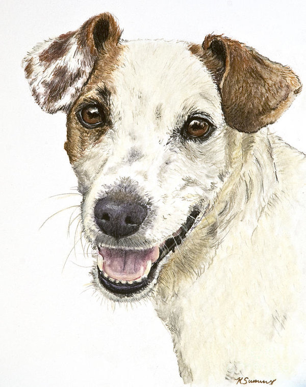Jack Russell Terrier,terrier,Australian Terrier, Brazilian Terrier, Cesky Terrier,