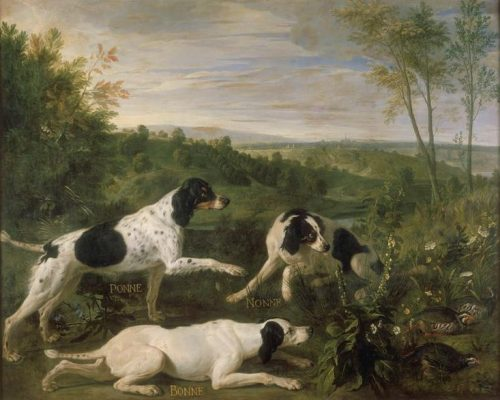 Dr. Caius,setter,dogs,dog history
