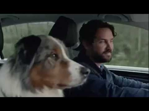 Volkswagen,Australian Shepherd,commercial,advertising,TV