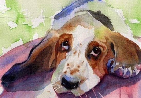 Basset Hound,Clumber Spaniel,Otterhound,Haw Eyes, third eyelid.nictitating membrane,haw,eye,