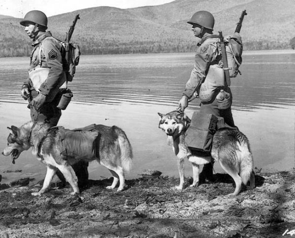 World War Where Dogs Were Trained To Serve