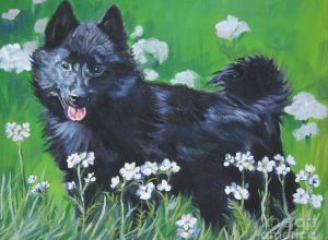 The Schipperke's Tail, or Lack Thereof