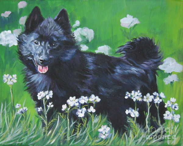 schipperke,tail,genetics,myth,legend
