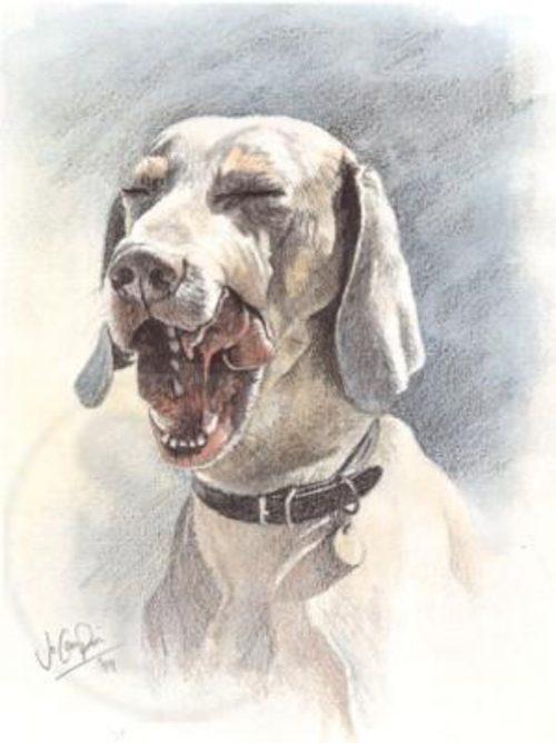 National Dog Day Weimaraner