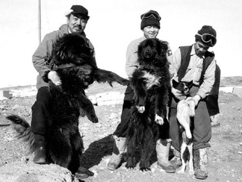 Sakhalin Husky,siberian husky,Taro,Jiro,