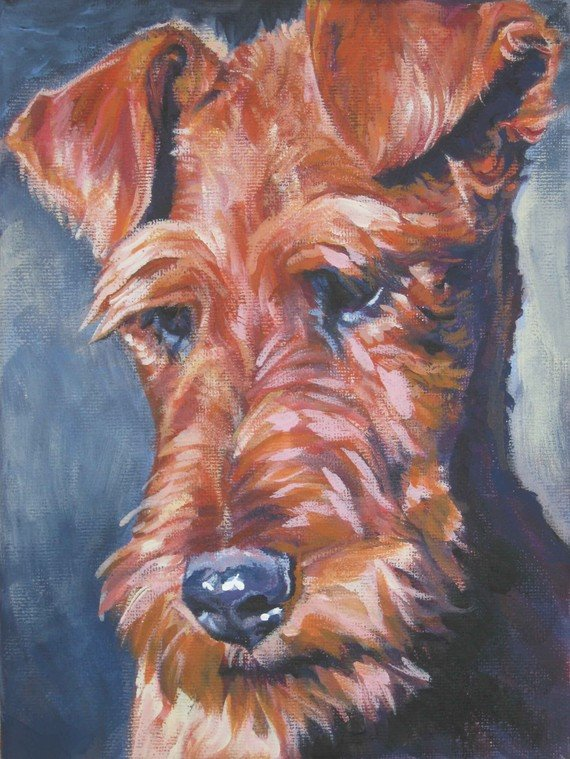 Fox Terrier,Irish Terrier,ears