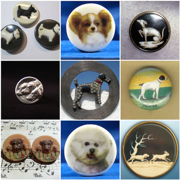 buttons,purebred dogs