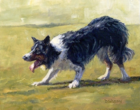 old hemp,old kep,border collie,breed name,collie,