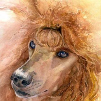 Poodle Color