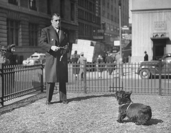 Ed Sullivan,Scottish Terrier