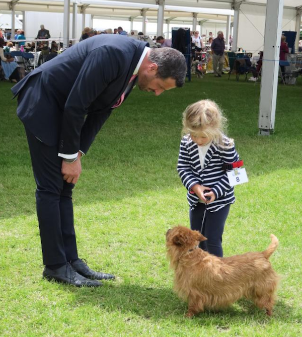 australian terrier,crufts,handler