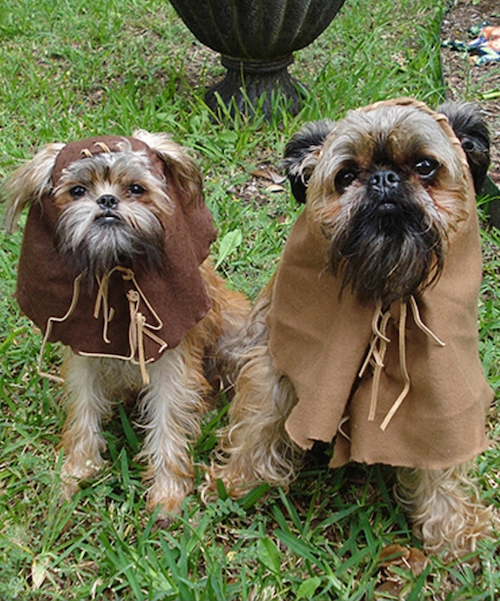 "Ewoks,Brussels Griffon,Verdell,Jack Nicholson,Star Wars, George Lucas,As Good As It Gets?"")"