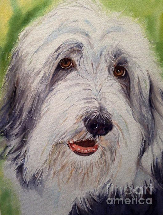 Bearded collie, greyhound, eyes, breed standard,