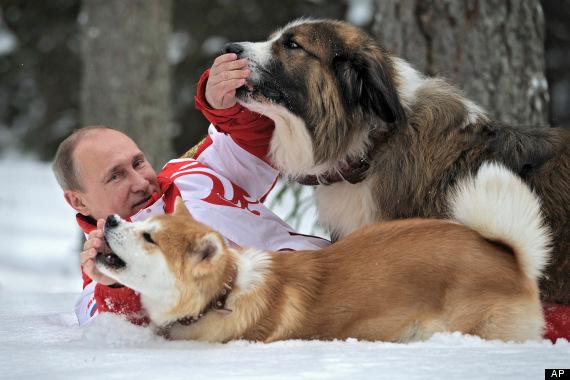 Buffy, Bulgarian Shepherd,Karakachan
