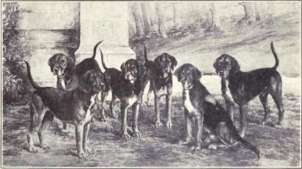 Kerry Beagle,Pocadan