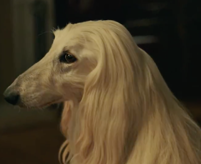 Afghan Hound,Southwest Airlines,TV,Commercial: