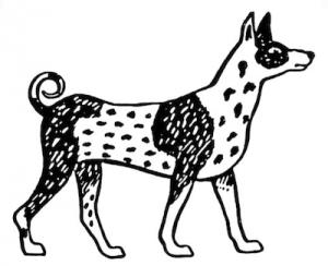 Kelef K'Naani, Kelef Kanani,Canaan Dog,Myrna Shiboleth,national dog,israel,proto dog