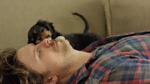 Puppies in Commercials: Yes, Yes, and Yes