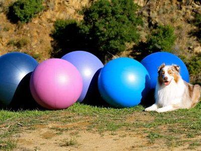 Treibball,agility,sport