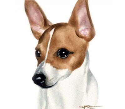 Toy Fox Terrier,Eliza Hopkins,Cathy Flamhotz