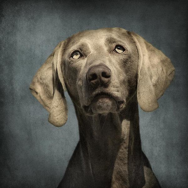 ownership,HSUS,PETA,dogs,