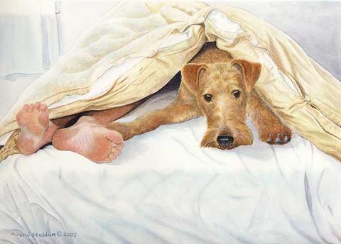 Irish terrier,mick,nickname,noah's ark,William Graham