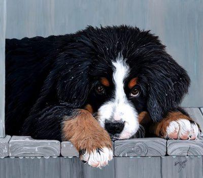Bernese mountain dog,durrbachler,Berner Sennenhund,history