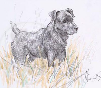 Border Terrier,spanning,dachshund,Patterdale Terrier,den trial, Introduction to Quarry, Junior Earthdog, Senior Earthdog,Master Earthdog.