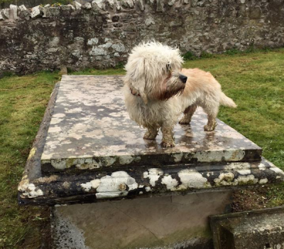Dandie Dinmont, Sir Walter Scott,Pepper,Mustard,James Davidson