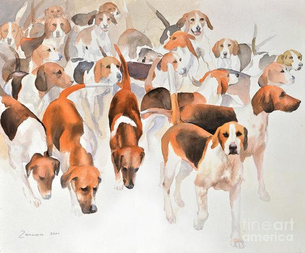 tail,stern,standard,Beagle,Irish Terrier,Border Terrier,Bloodhound,Smooth Fox Terrier,English Foxhound