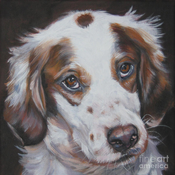 irish red and white setter,hunting dog,kennel club