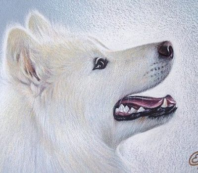 samoyed,Curtis M. and Thelma R. Brown, dalmatian, arctic breeds, northern breeds,