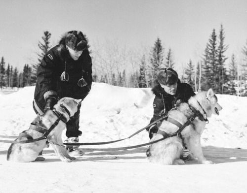 Northwest Snow Dog Rescue