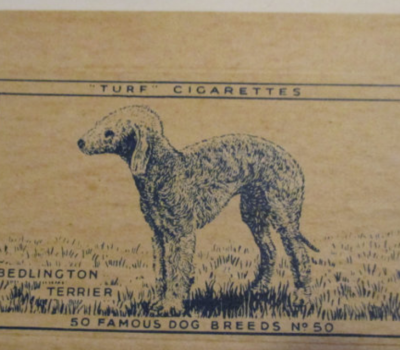 Bedlington Terrier,cigarette card,trading card,Gallaher Cigarette Company,Carreras' Black Cat,Australian Terrier,Turf Cigarettes,