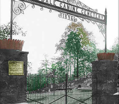 Hartsdale Pet Cemetery,Vizsla,war dog,War Dog Memorial,Nancy Schiesari,Matthew Plumeri
